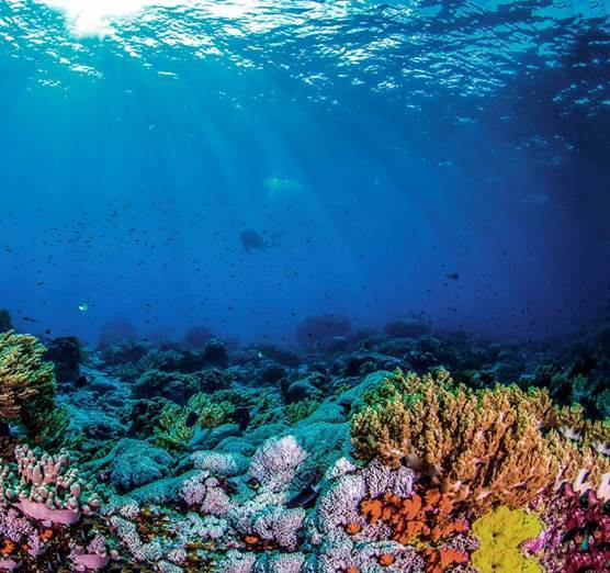 8 CZERWCA – ŚWIATOWY DZIEŃ OCEANÓW W JAKI SPOSÓB MOŻEMY O NIE ZADBAĆ?